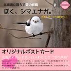 《シマエナガ》オリジナルポストカード(12枚セット)【送料無料・後払い可】
