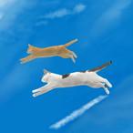 絵画 インテリア アートパネル 雑貨 壁掛け 置物 おしゃれ 猫 動物 空 デジタルアート ロココロ 画家 : rune 作品 : 空飛ぶ猫