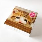 40%OFF CAT PIC 五十嵐さん子猫(クッキー5個入り)(賞味6/20以降)