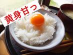 採れたて直送便☆ふみちゃん家のたまご(40個入り)
