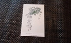 植物 ポストカード F
