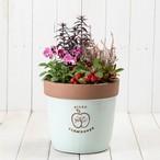 赤茶系の花や実でまとめたスミレの寄せ植え [A-P001]