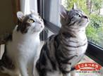 セミオーダー猫写真パネル制作