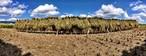 【新米】山地の自然栽培!平成30年度徳島県産コシヒカリ*5kg