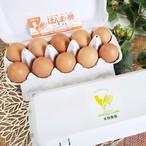 【先着1名様】本間農園さんが生まれたてのヒヨコから育てたレモンイエローの黄身をした「ほんまの卵」2パックセット[送料無料]