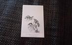 植物 ポストカード O