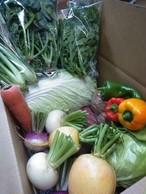 【ギフト頒布会5回発送】はるきち旬を楽しむ有機野菜ギフトセット