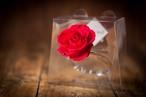 プリザーブドフラワー/Jewel Ring-誕生日カラー-4月