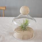 [FARM]無垢の木とガラスのテラリウム(今だけチランジア付き!)