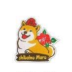 柴犬まる 刺繍ワッペン -たこまるSummer-