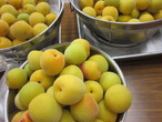 黄熟梅 1箱 1,000g(6月10日~6月中旬収穫)