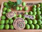紀州★青梅3キロ★無農薬自然栽培★梅しごと