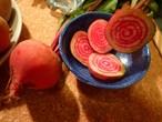 サークルビーツ!流行の美しい野菜。
