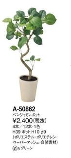 幸福をもたらす樹 ベンジャミン:高さ39cm