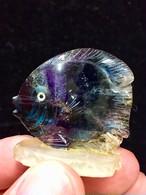 1) フローライト「熱帯魚」