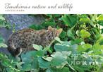 2021年カレンダー 川口誠写真集 対馬の自然と野生動物 ~Tsushima's nature and wildlife~