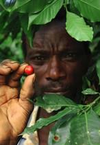 タンザニア ブラックバーン農園   深煎り 200g