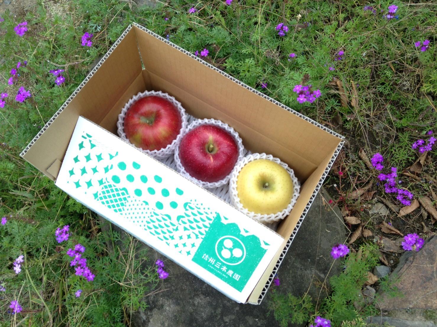 信州産のりんごが美味しい季節になりました!3つのりんご品種の食べ比べセット。