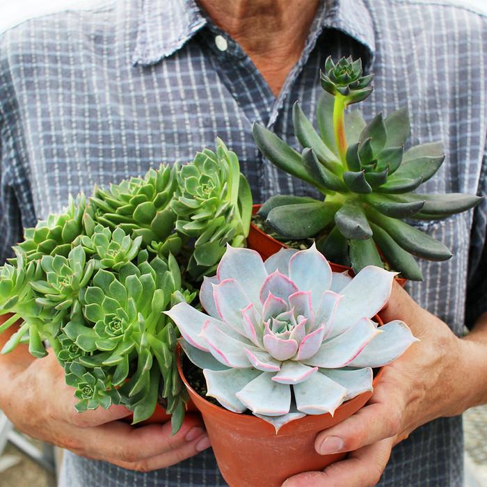 <お花のつくり手 応援>河合孝徳さんの多肉植物農園を訪問取材。