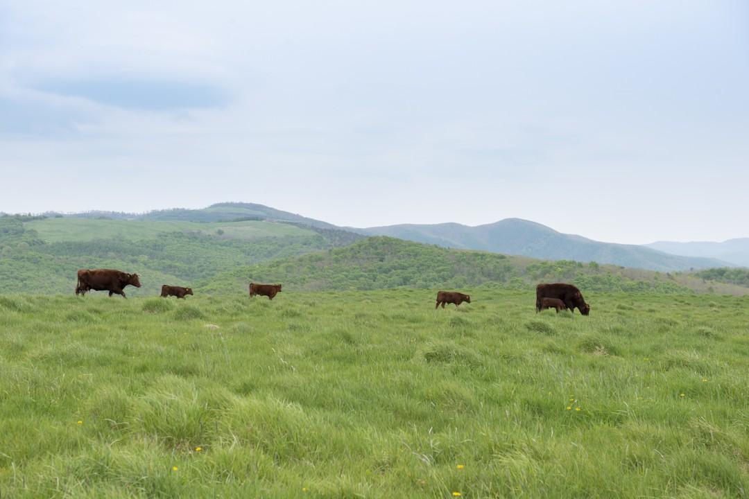 山形村短角牛の1年