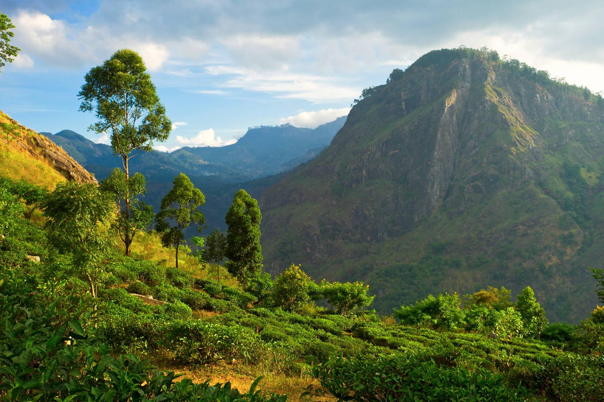 スリランカでアーユルヴェーダ・ハーブティーをオリジナルで作っています。
