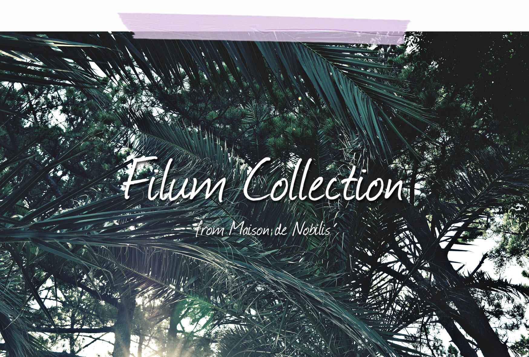 Filum Collection LOOK BOOK