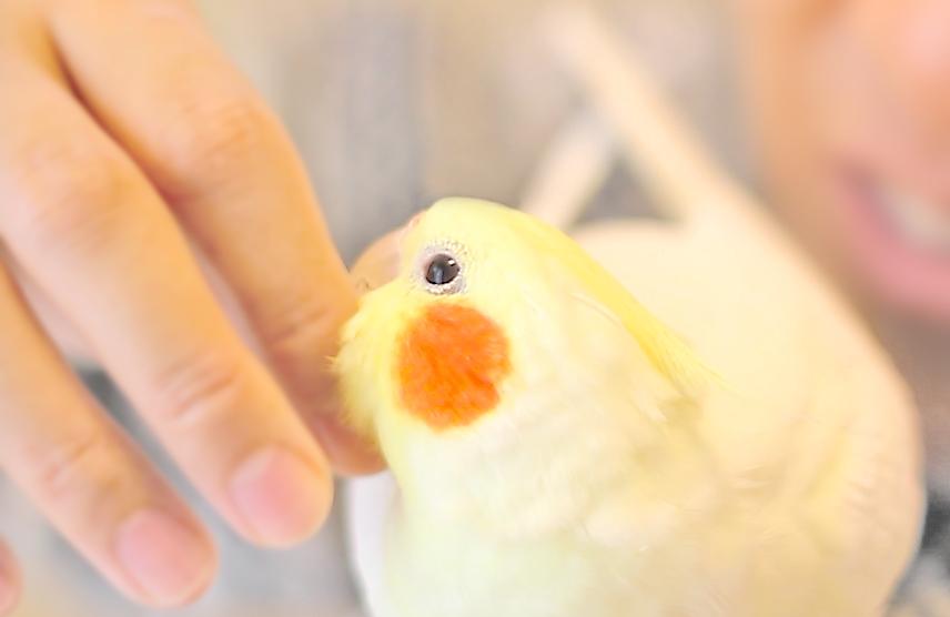 4年目を迎えた傷ついた小鳥を救うチャリティー【2018年の寄付のご報告】