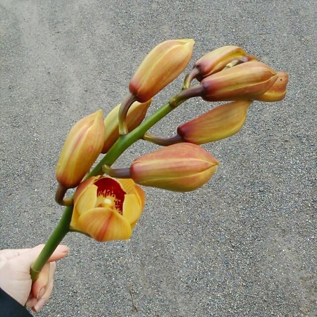 ムーンサイン・ジェネシス、開花♪