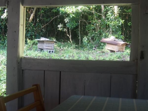 お客様もたくさん来てくれました。ハチも元気に飛んでいます。