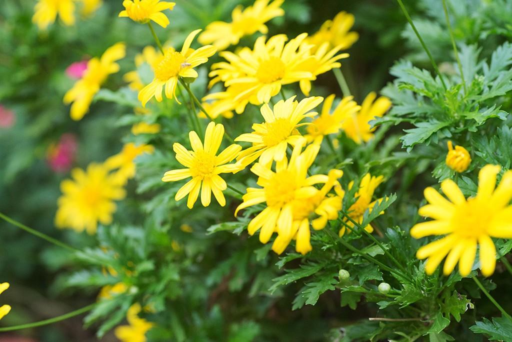 季節の風を感じて…お庭やベランダでお抹茶を愉しむ