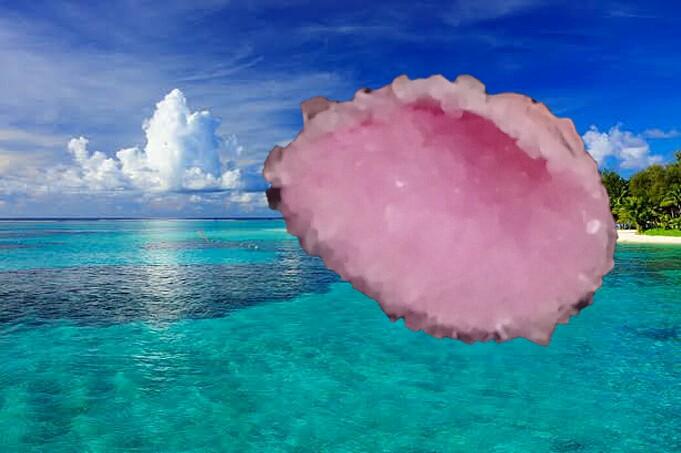 クリスタルの貝殻