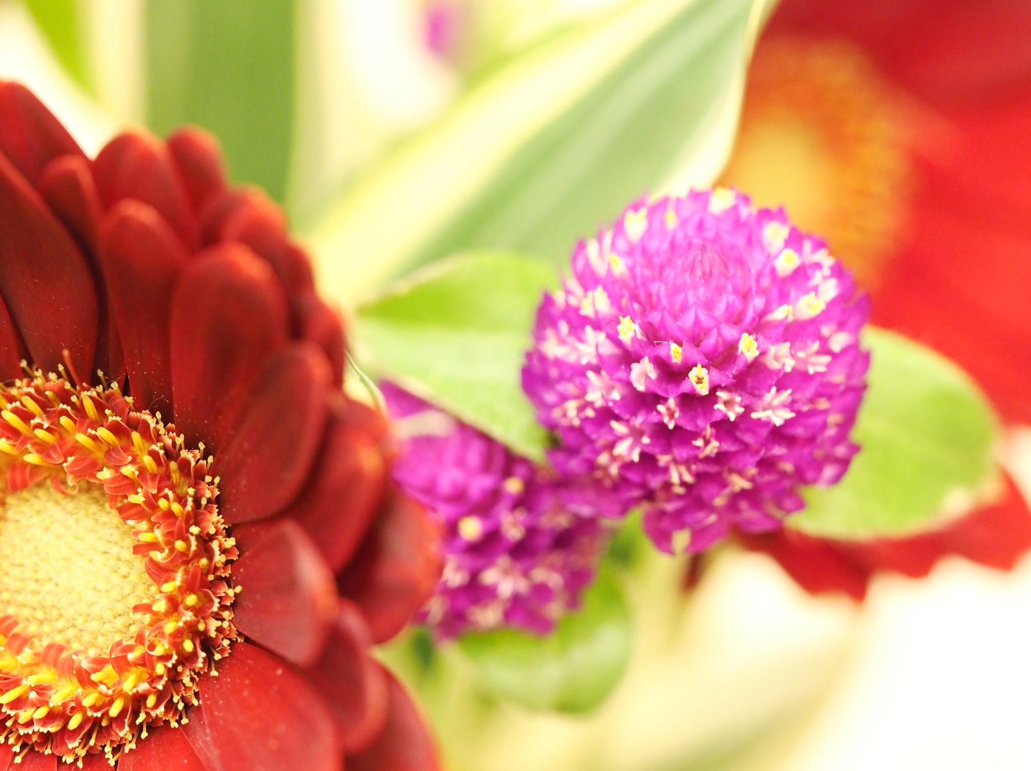 綺麗な色合いのガーベラ&千日紅