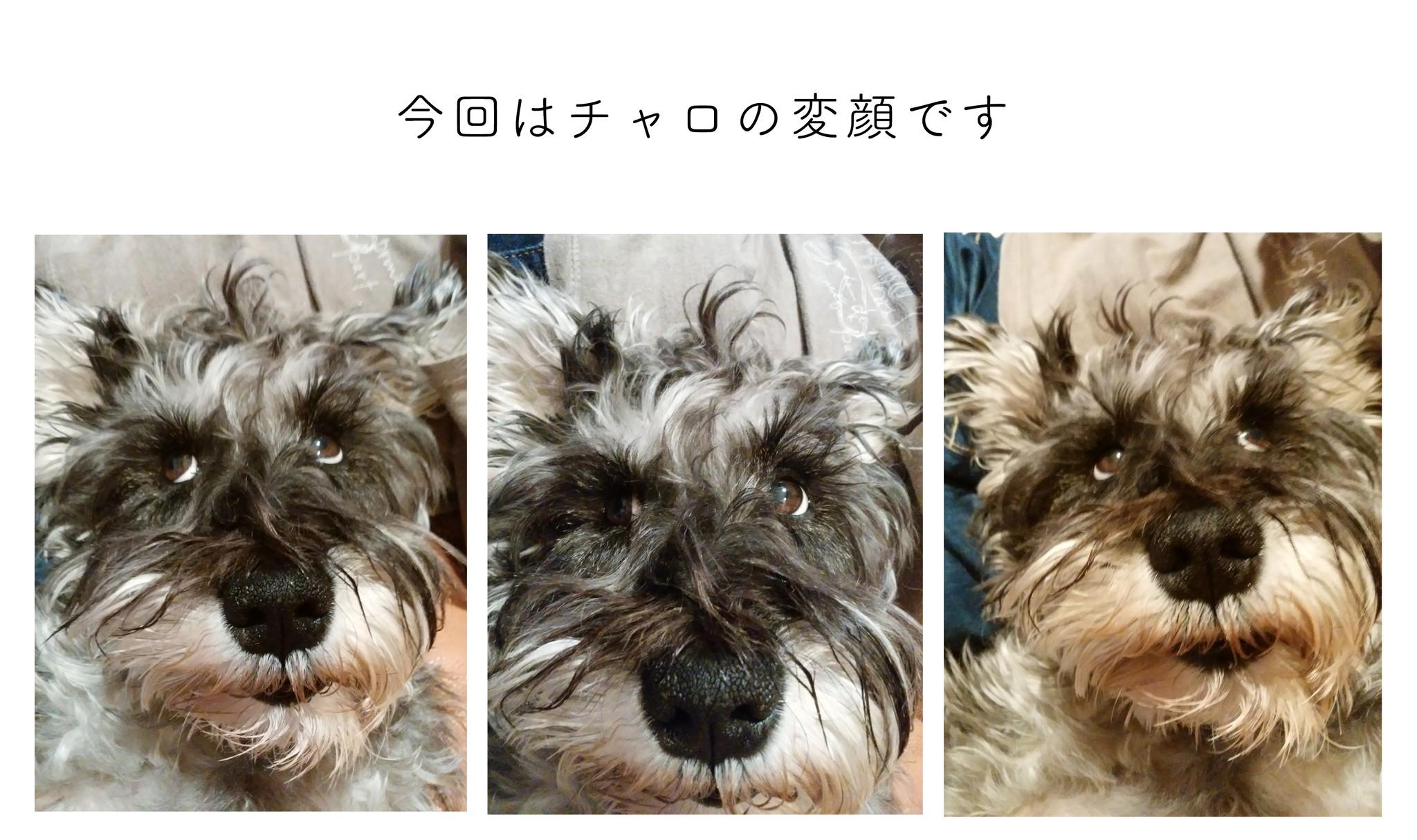 チンピラ犬タコちゃん、犬嫌いは治るのか〜no.7