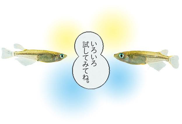 最近人気の分づき米について♪ 〜7分づき米〜