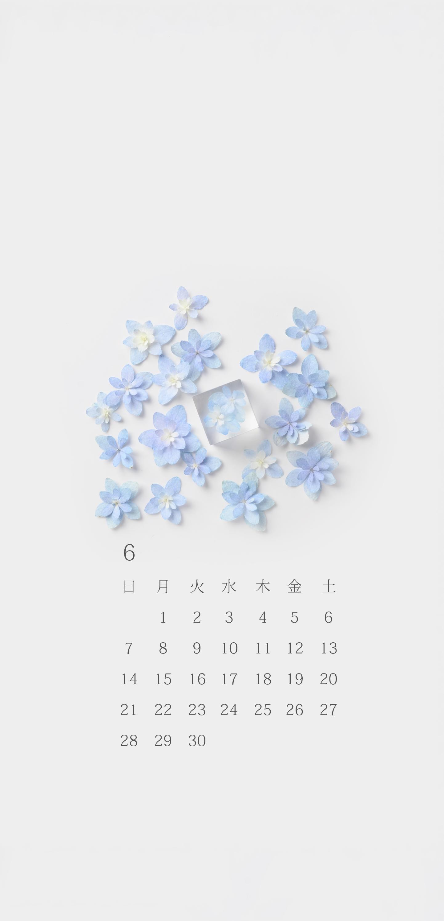 無料ロック画面カレンダー 「6月 紫陽花」
