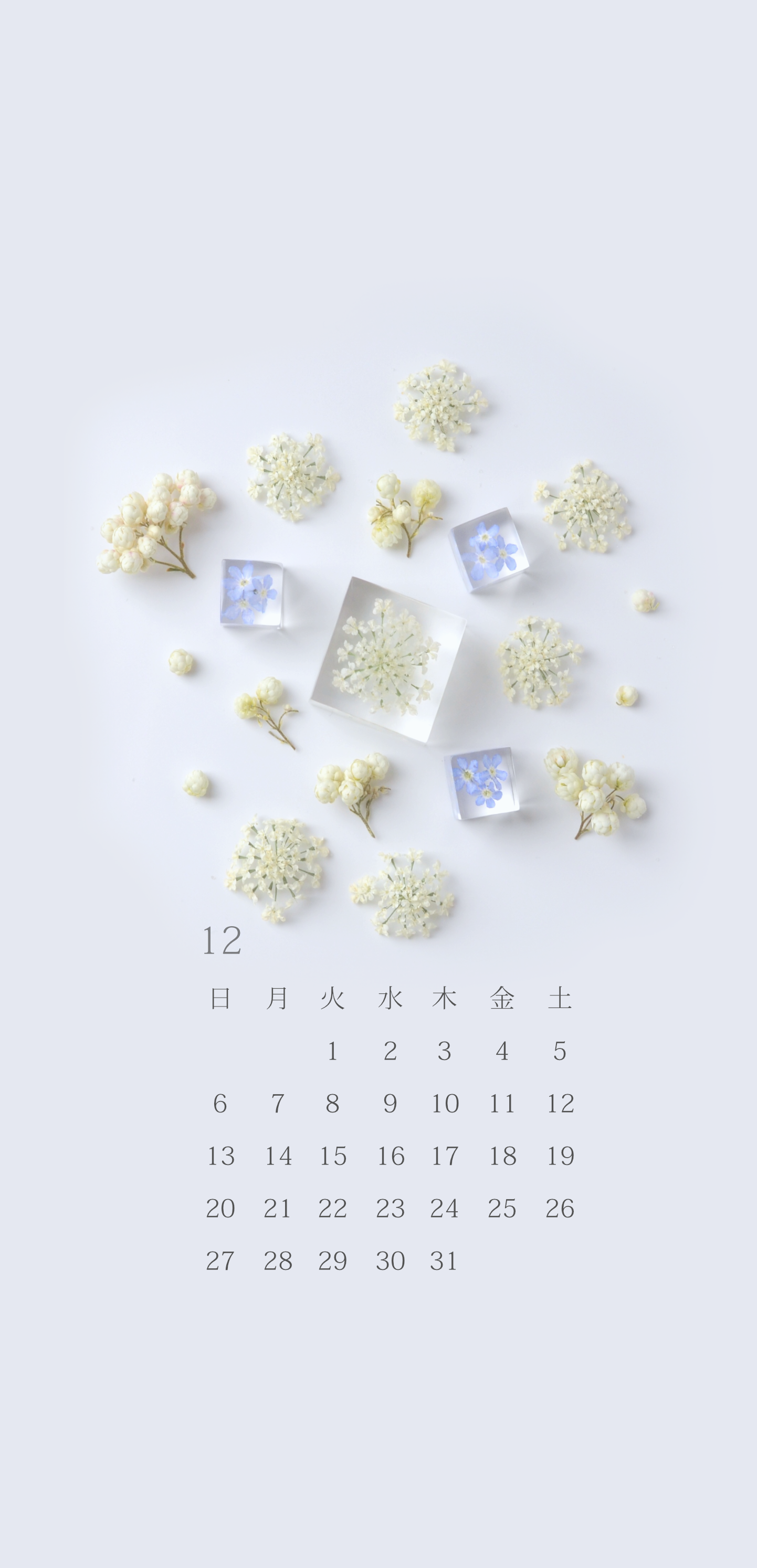 無料ロック画面カレンダー 「12月 レースフラワーと勿忘草の雪景色」
