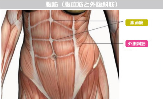"""お腹周りを頭上に伸ばすための骨盤前傾アプローチにフォーカス~緩みから""""引き締め""""モードに変わる意識~"""