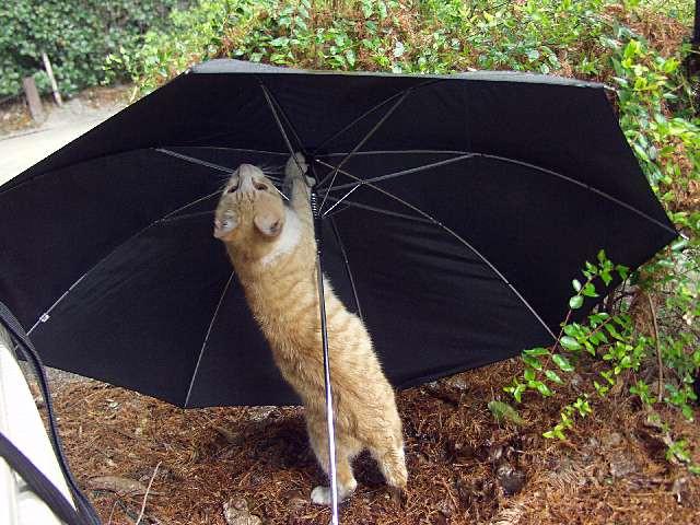 日傘男子御用達!