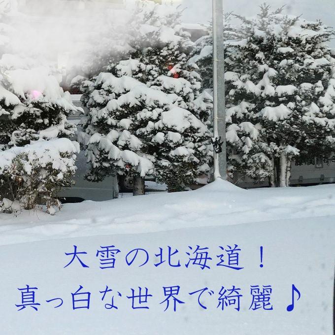 大雪だけど雪景色はキレイな北海道♪