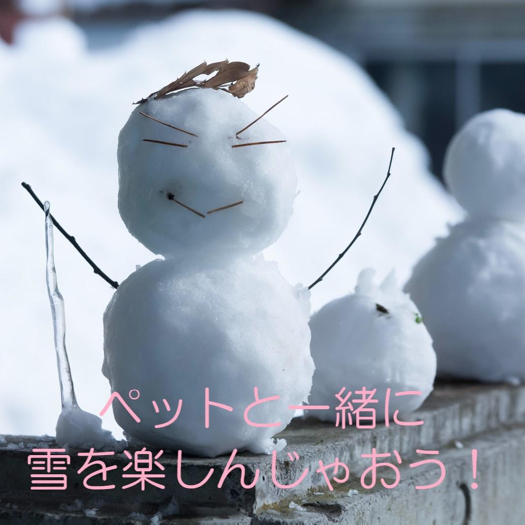 せっかくだから雪を楽しもう!