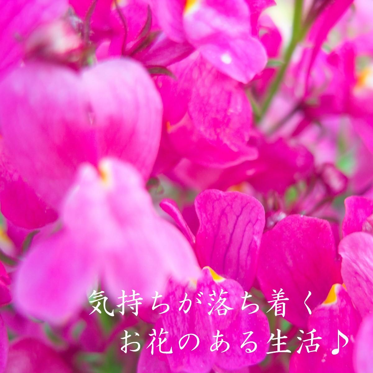 長持ちする「お花」を生活の一部に♪