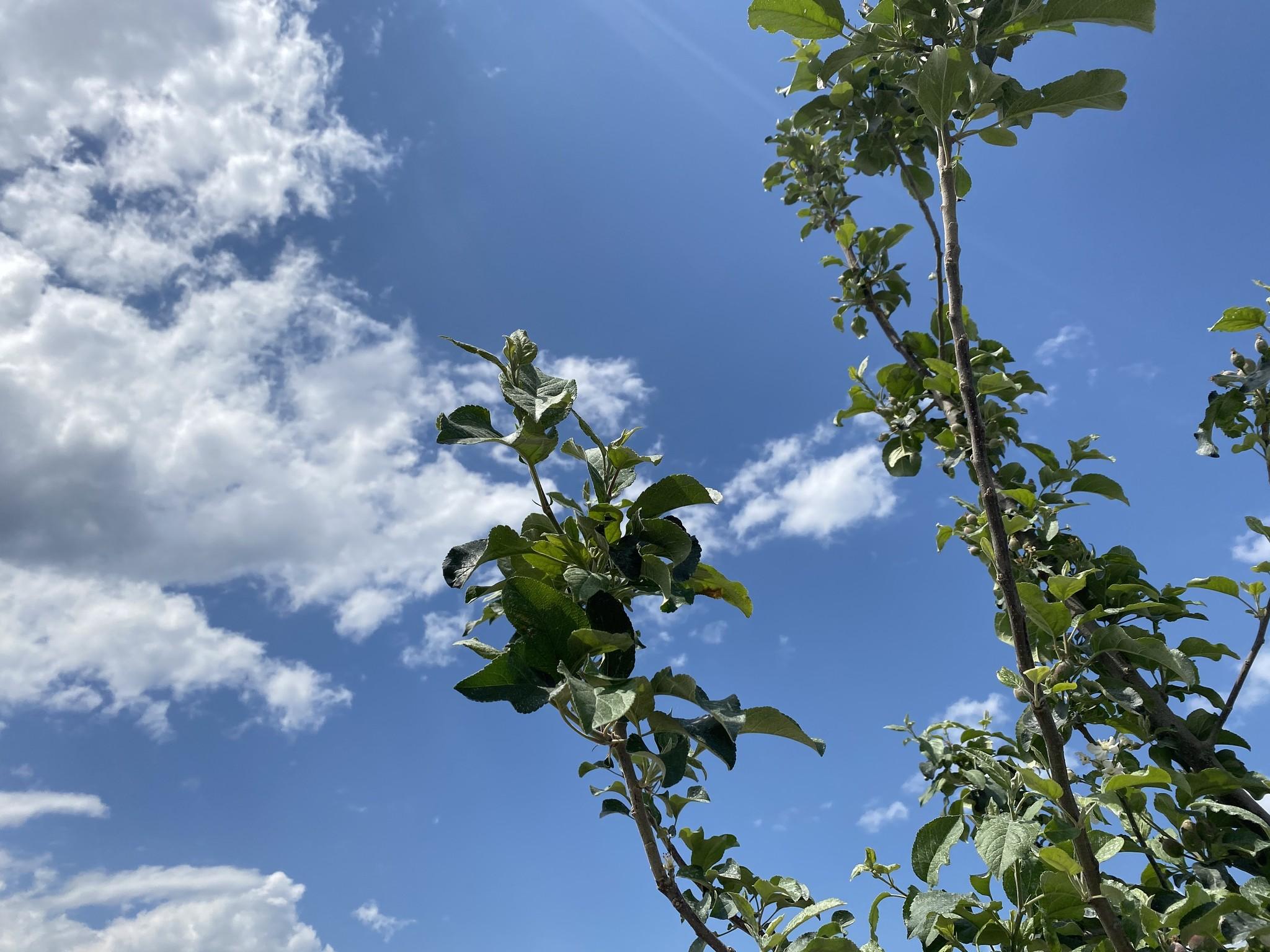 2020年「人と自然がよろこぶ完熟桃」🍑予約販売開始!重要なお知らせ