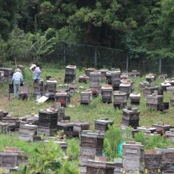 はじめまして、廣田養蜂場です。