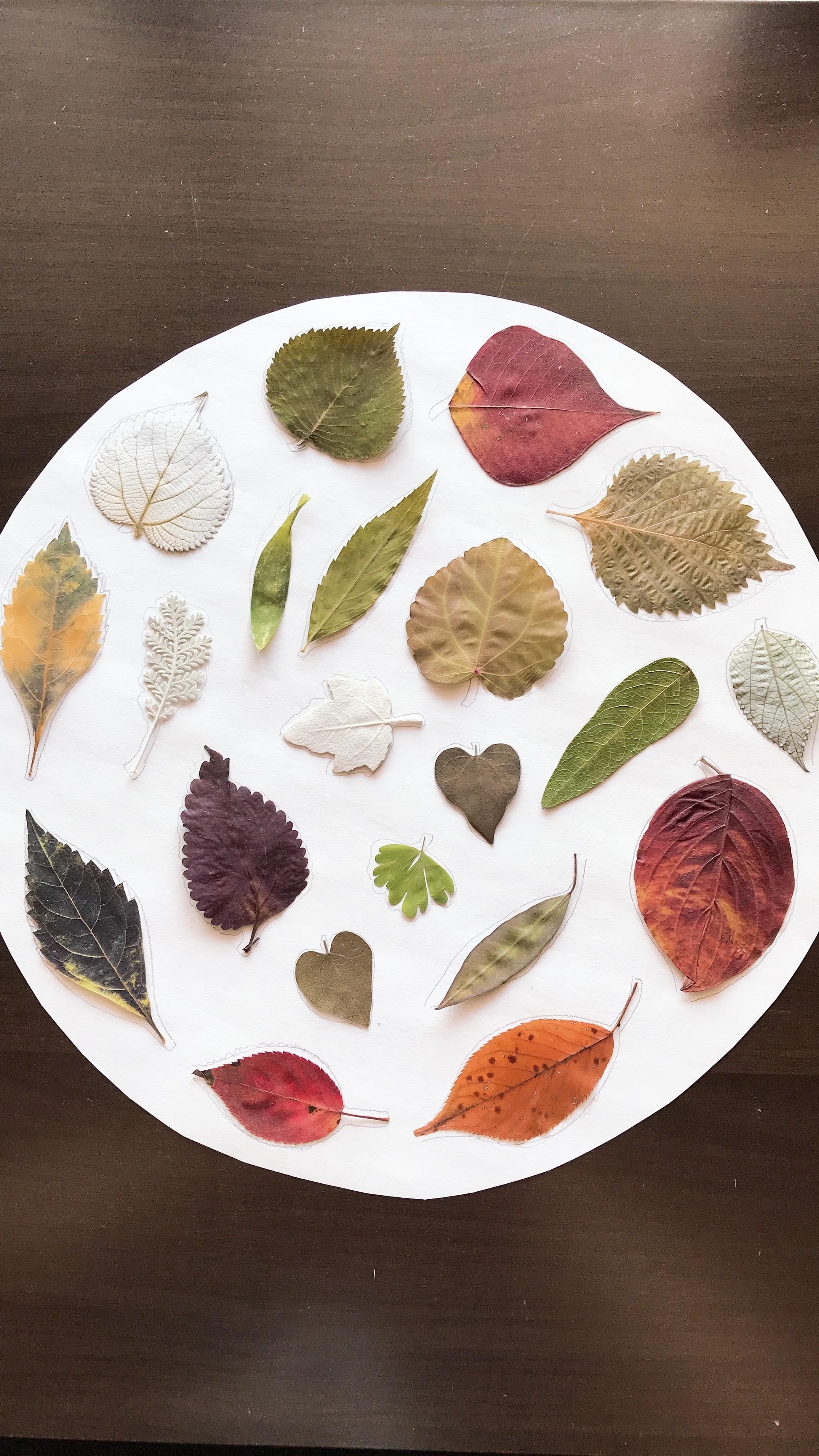 葉っぱを並べて