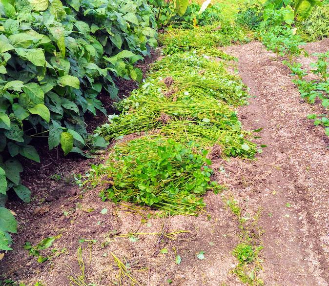 夏野菜が終わり冬野菜の準備中