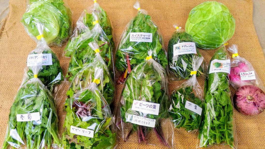 とれたて旬の野菜セットがお得です!