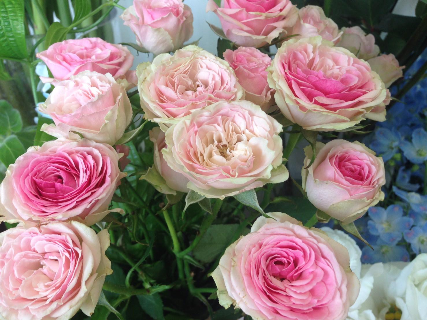 新商品のお知らせ。埼玉県のお花屋さん店長。