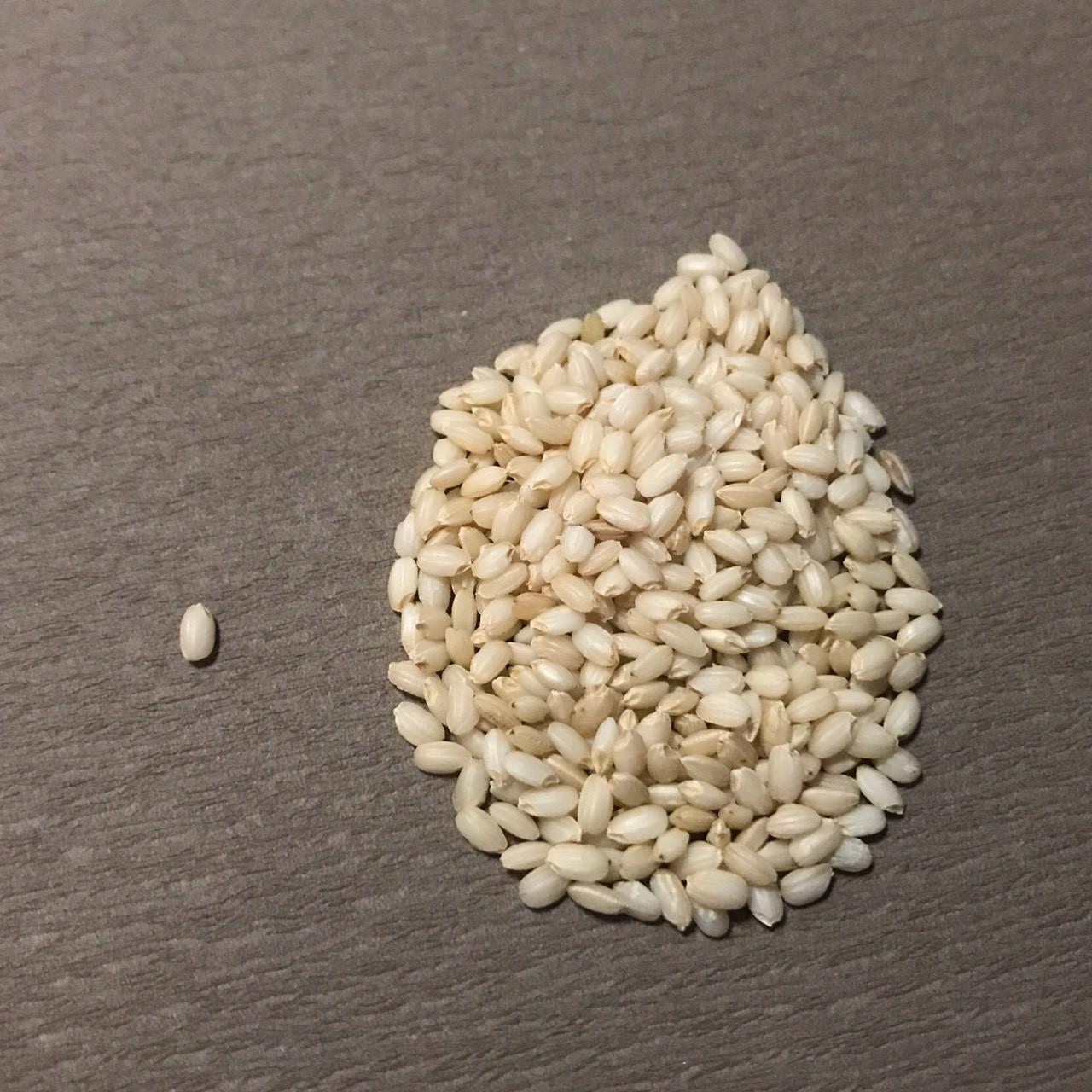 自宅で作れる!【巷で話題!酵素玄米ってなに?】