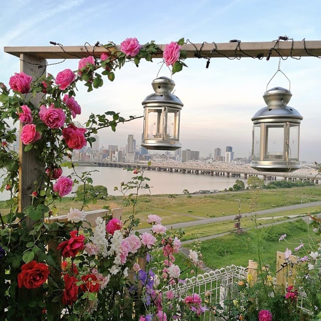今、夏の花の苗を植えましょう。