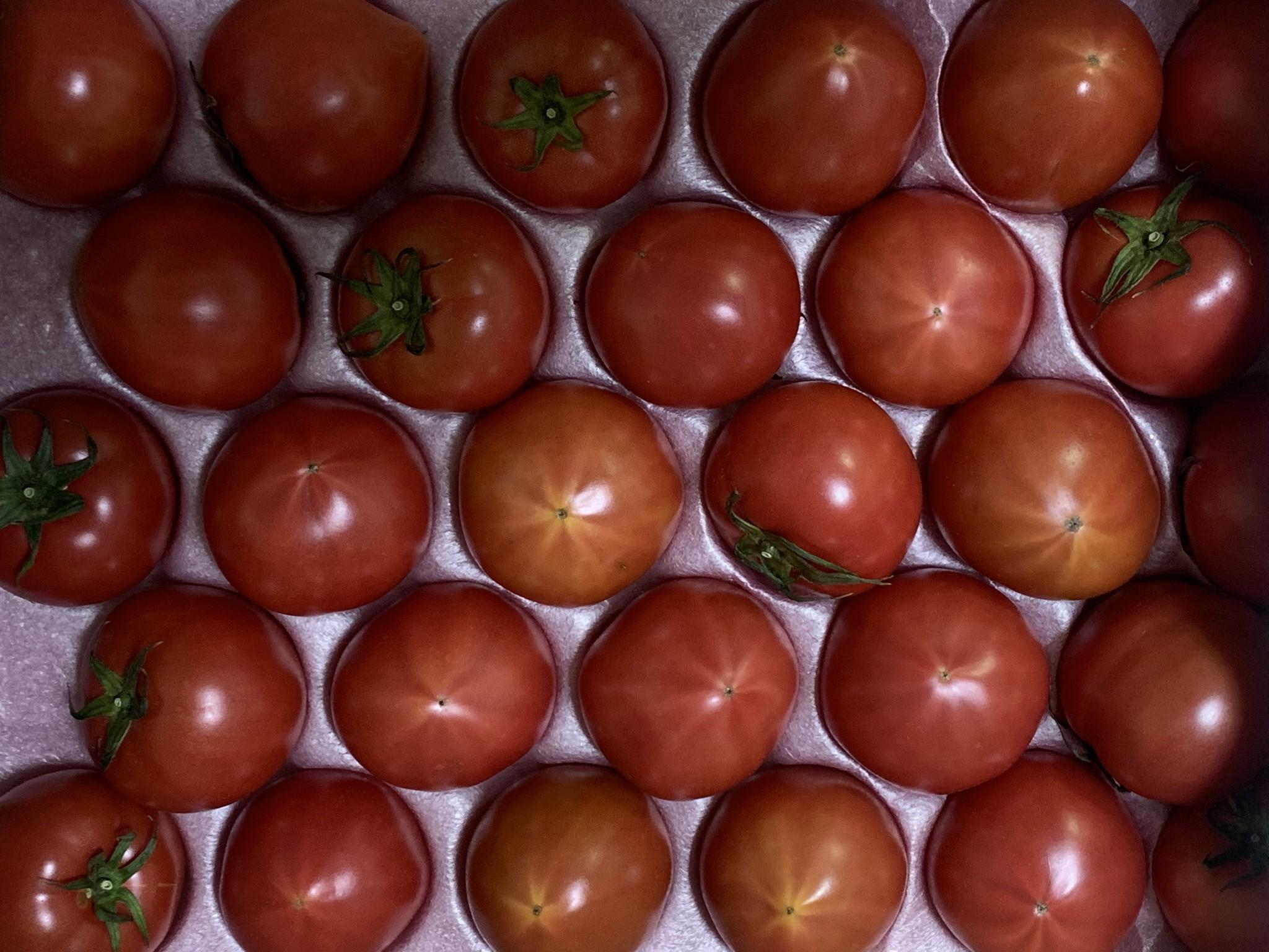 自然受粉されたトマト